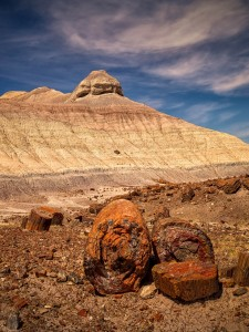 Petrified Forest Michael Zheng 2